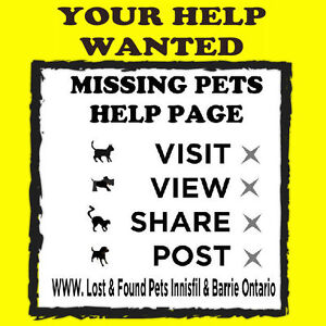 Lost & Found Pets Innisfil & Barrie Ontario is an Open Facebook