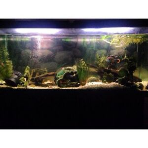 75 Gallon Fish Tank With Fish and accessories