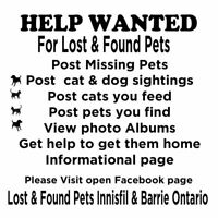 Lost & Found Pets Innisfil & Barrie Ontario
