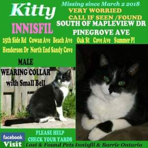 Kitty lost at pinegrove avenue in Innisfil