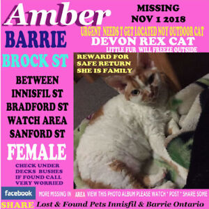 MORE CATS MISSING  & MORE SEEN /FOUND IN BARRIE /INNISFIL