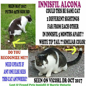 """CATS FOUND OR SEEN  in INNISFIL """"HELP FIND THEIR FAMILY"""""""
