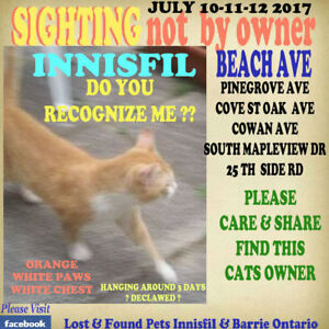 "CATS FOUND OR SEEN  in INNISFIL ""HELP FIND THEIR FAMILY"""