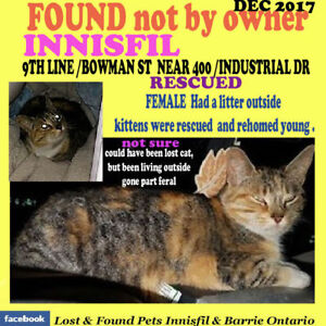 CATS FOUND OR SEEN  VISIT OUR PAGE