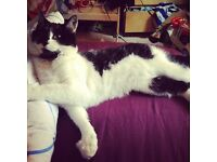 Missing domestic black and white cat