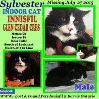 CATS MISSING IN ALCONA INNISFIL PLEASE HELP WATCH SHARE