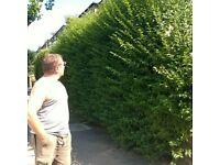 Gardening Heavy Clearance and Regular Maintenance