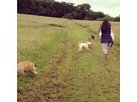 Dog Walking, Behavioural Training & Animal Husbandry Service/Pet Sitting North West/West London