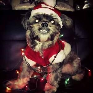 Hurry! Xmas Sale for Dog Training!!