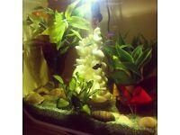 White BiOrb Life Aquarium Fish tank 30l