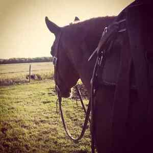 Summer is coming! Horse training and lessons!