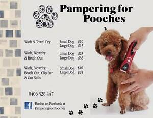 Pampering for Pooches Ellenbrook Swan Area Preview
