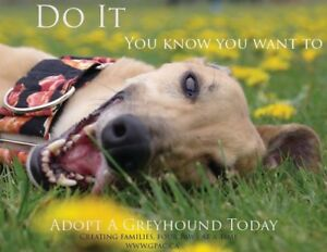 GPAC ( Greyhound Pets of Atlantic Canada ) Adopt or Foster