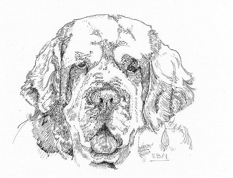 Clumber Spaniel Cards 10 Cards