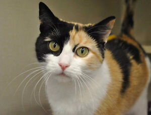 Lost calico cat-- has come back