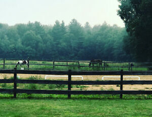 Equestrian Ranch for Full Boarding in Dunnville ON