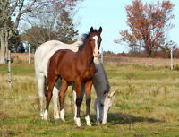 Horse boarding for breeding mares, young horses + more...