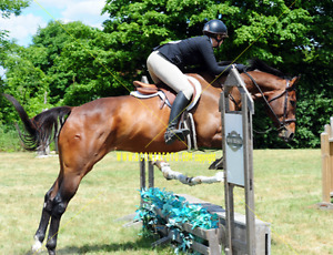 Hunter Show Horse For Part Board