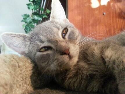 Little Paws Kitten Rescue - Lucky Hemmant Brisbane South East Preview