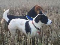 Abernethy - Dog walking service