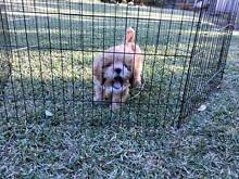 Pet Playpen for Puppy Kenmore Brisbane North West Preview