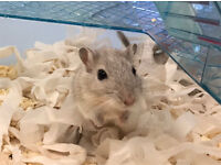 Baby gerbils and cage.