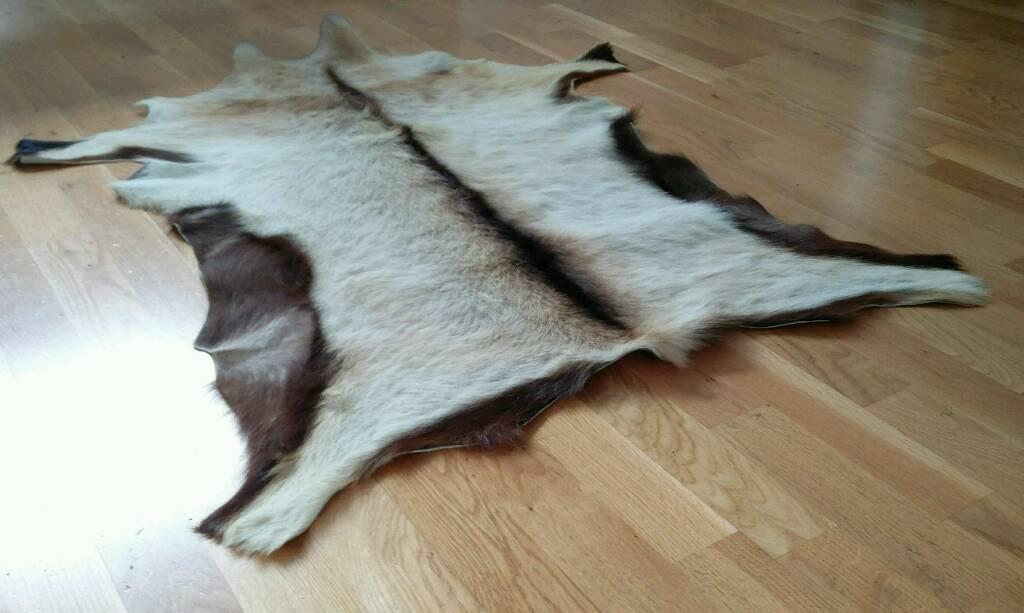 Goat skin rug | in Bishops Stortford