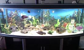 AQUARIUM FISH TANK, AQUA ONE 6 FT