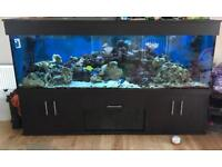 NOW REDUCED 2 fish tanks and equipment