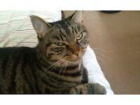 Missing CAT IN SEATON