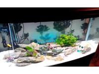 Full tropical fish tank