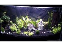 Set of Tropical Fish + 2 Kind Live Plants Free