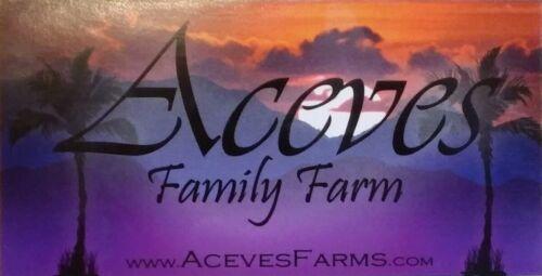 Jumbo 11 lbs 2020 Medjool Dates - Aceves Farms California
