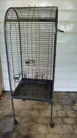Grey Parrot/Bird cage