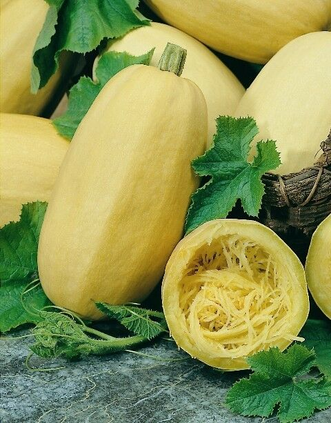 how to grow winter squash from seed