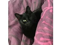Lost black cat- SE6
