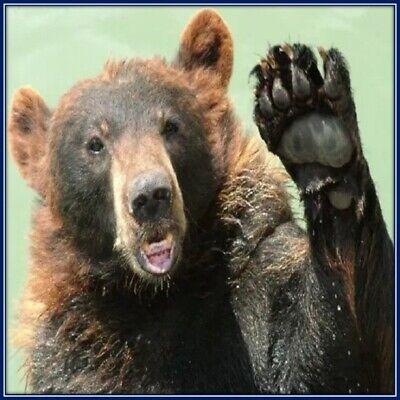 30 Custom Bear Personalized Address Labels