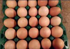 Pasture Raised Chicken Eggs