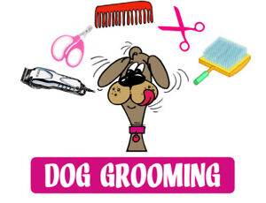 DOG GROOMING SERVICES AT YOUR HOME