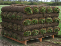 *SPECIAL PRICE* Kentucky Bluegrass sod- 700 sq feet-70 rolls