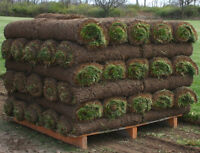 Need grass? It's not to late!! Best prices, quality and WARRANTY