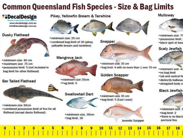 Queensland fishing guide decal 105cm long ruler sticker for Fish ruler sticker