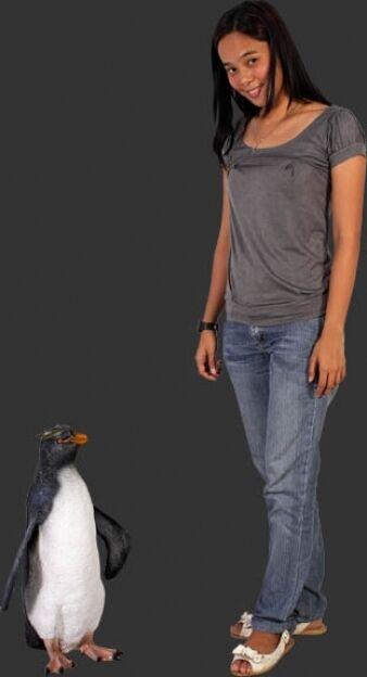 Rockhopper Penguin Replica