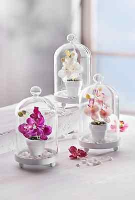3 er Set Glasglocken mit Orchideen  Deko - Set Geschenkset Orchidee mit Topf