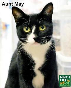 """Adult Female Cat - Domestic Short Hair: """"Aunt May"""""""