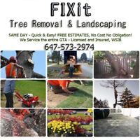 Tree, Stump, Bush & Hedge Removal + Landscaping✔Same or Next Day