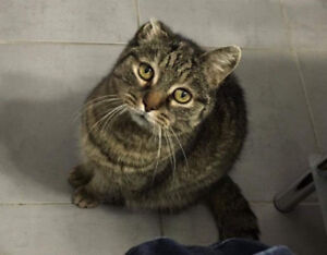 Missing Brown Tabby, Victoria Park and Lawerence