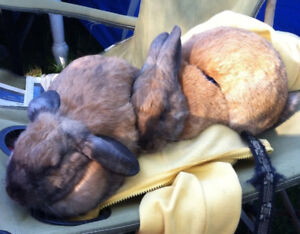 Bunnies to good homes