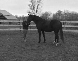 Gelding for Free lease or Sale
