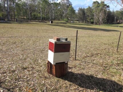 Bee Hives for Sale 10-15 kg of honey to be extracted Double box
